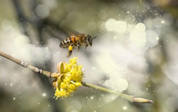 Über Bienen